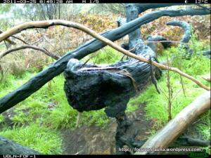 Falls Rd, Strath Creek log.