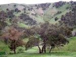 Remnant Grassy Woodland