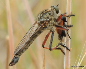 Entree - Beetle Brioche