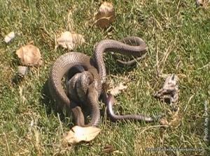 Snake v snake