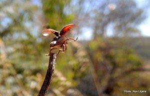 Weevil take-off