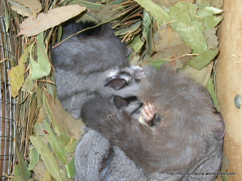 Focus On Fauna | Wildlife Fire-recovery Project ...