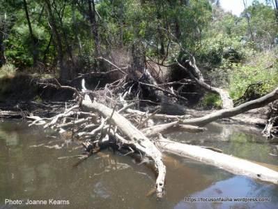 Excellent instream habitat